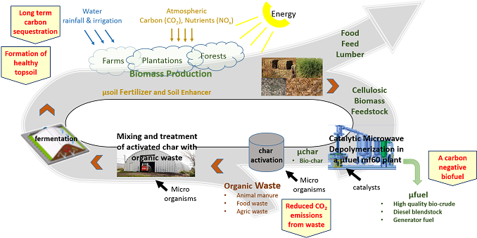 carbon and nutrient cycles